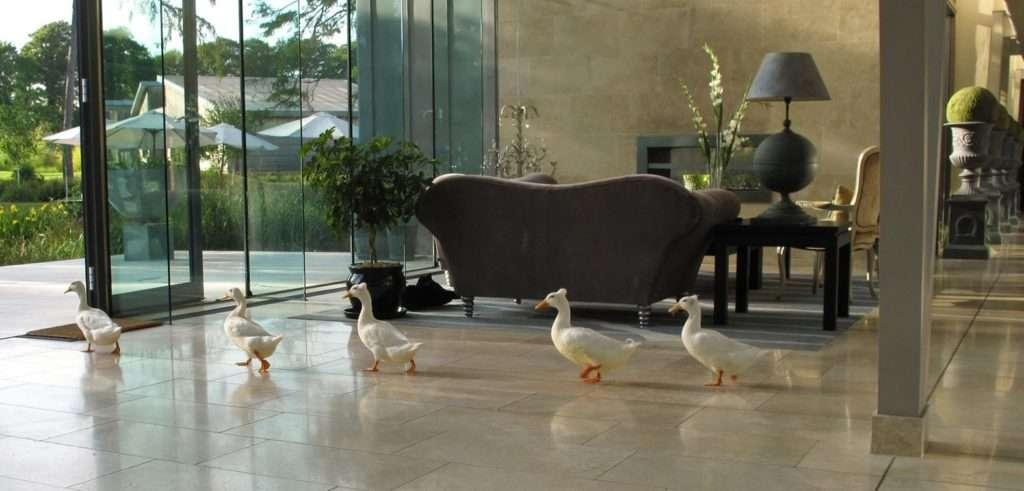 Resident ducks at Monart; Monart nature; Blog; Monart gardens