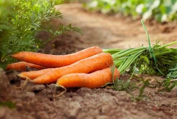 Cullens Fruit & Vegetables at monart wexford ireland