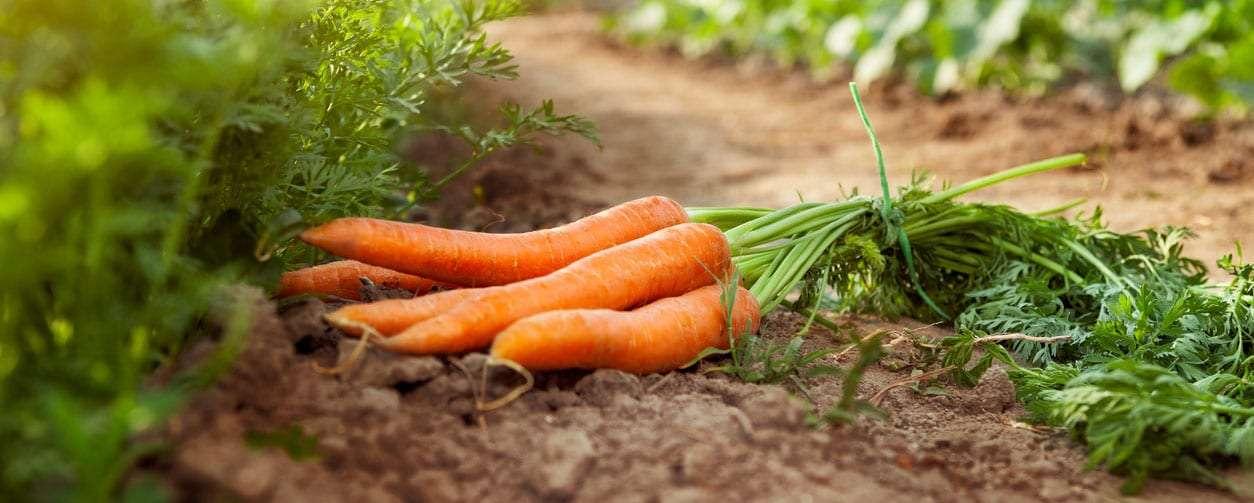 Cullens Fruit & Vegetables